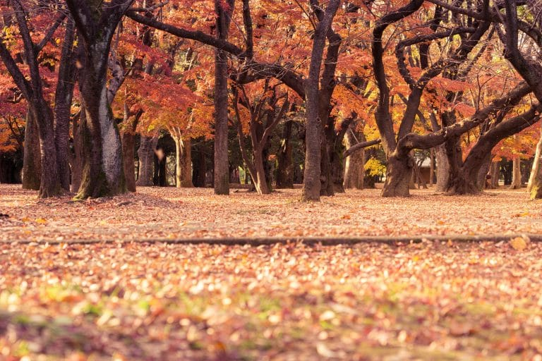 Leaves falling in a park in autumn